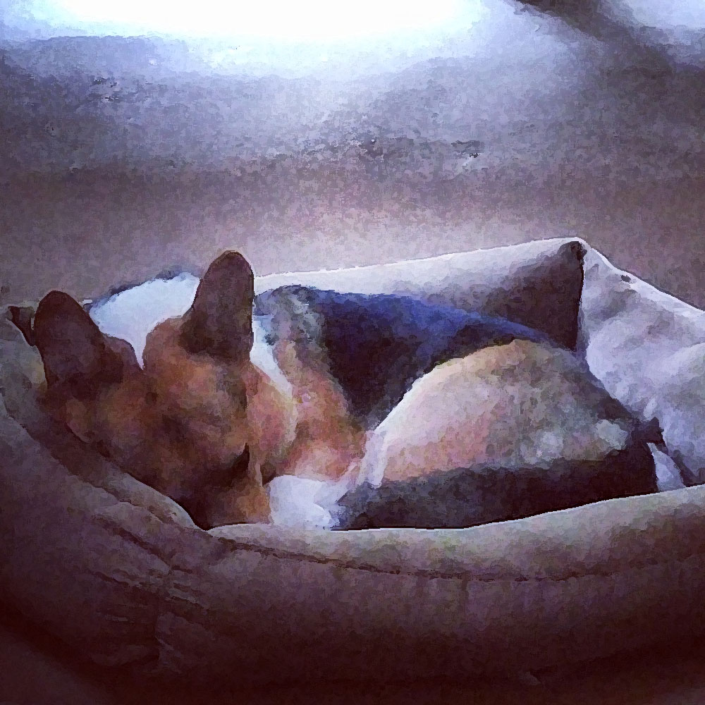 Kebab the Corgi napping on a rainy day