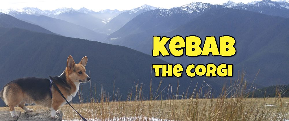 Kebab the Corgi