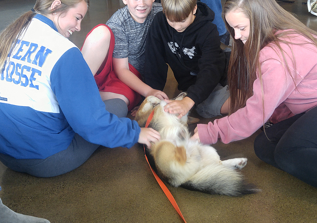 Four kids petting Kebab the Corgi